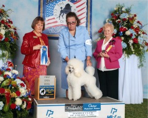Harrison PCA 1st in open dog 2015