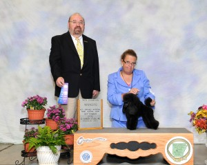 Aybelline is a new champion, handled by Sherri Vidrine under judge Raymond Filburn 9-28-13 in Hot Springs Arkansas